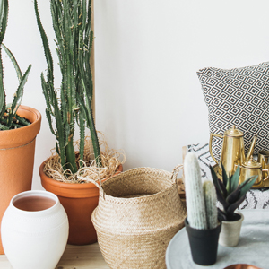Home lifestyle image of a variety of cacti in pots and baskets